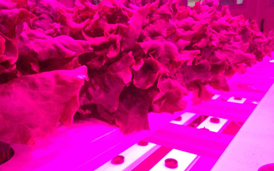 10 Ways to Grow the Indoor Farming Market