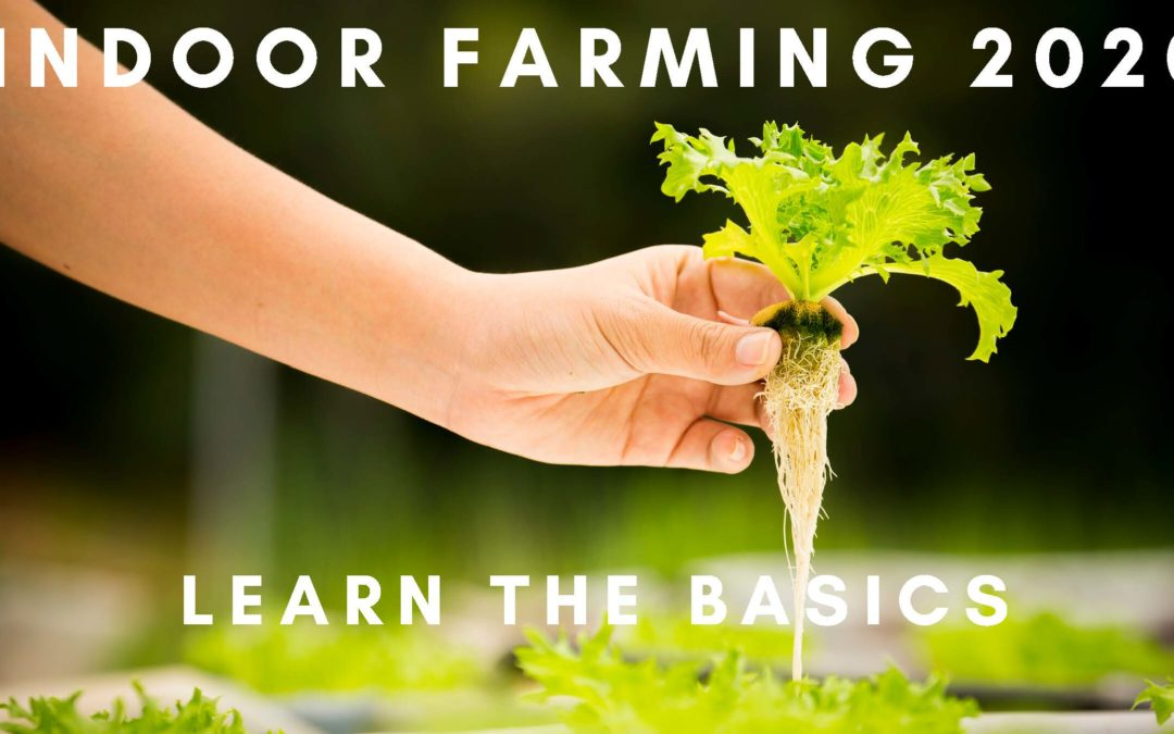 What Is Indoor Farming?