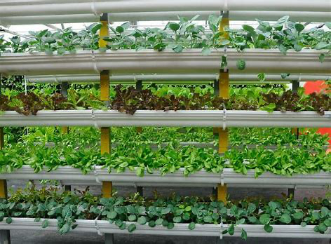 Vertical Farming in New Jersey