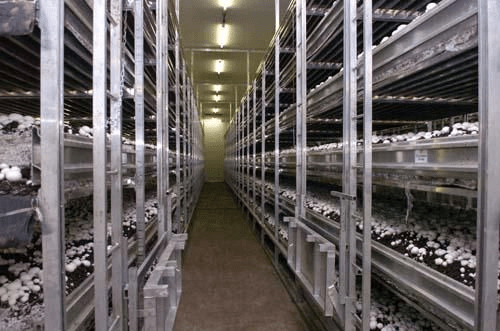 Inside a High-Tech Mushroom Farm